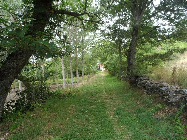Camino-del-Castano.jpg